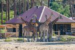 6-persoons vakantiehuis Savanne Lodge