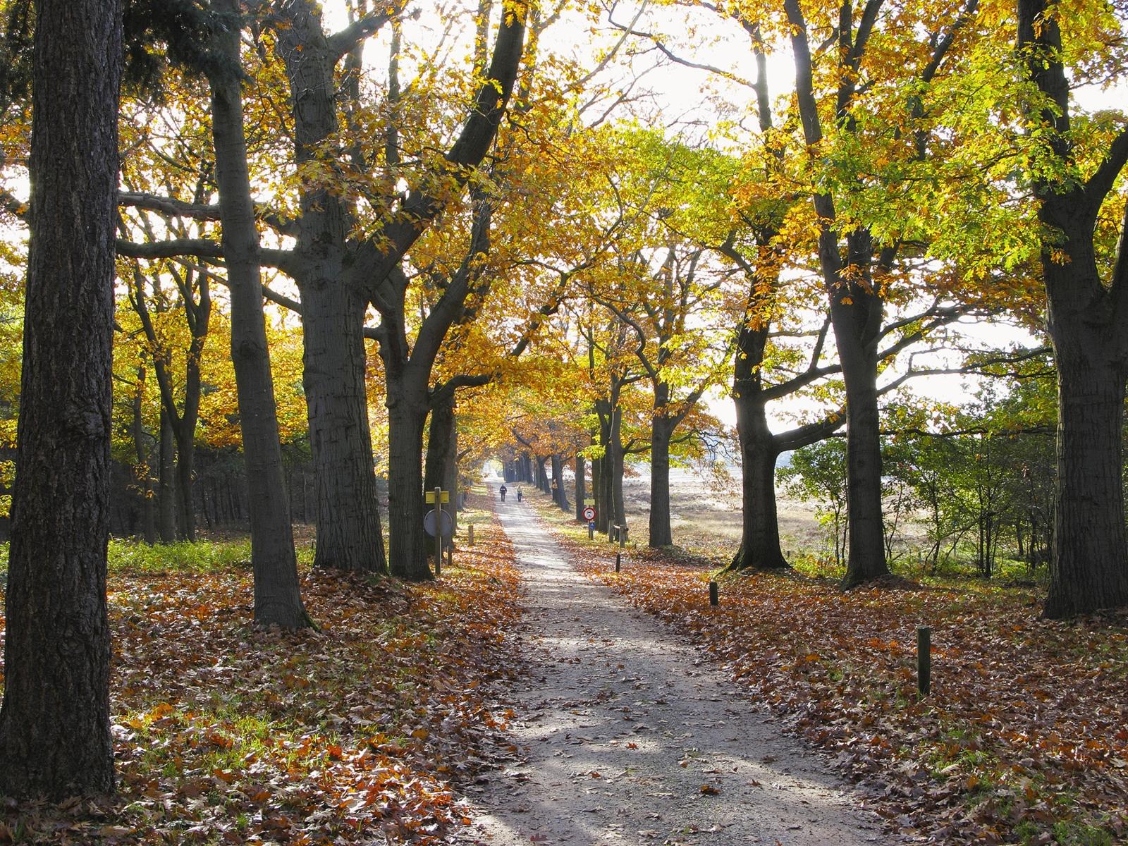 TOP DEAL vakantiepark Twente 🏕️Vakantiepark De Lindenberg